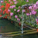 La Fontaine de Village