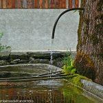 L'Arbre Fontaine