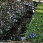Canal longeant les jardins